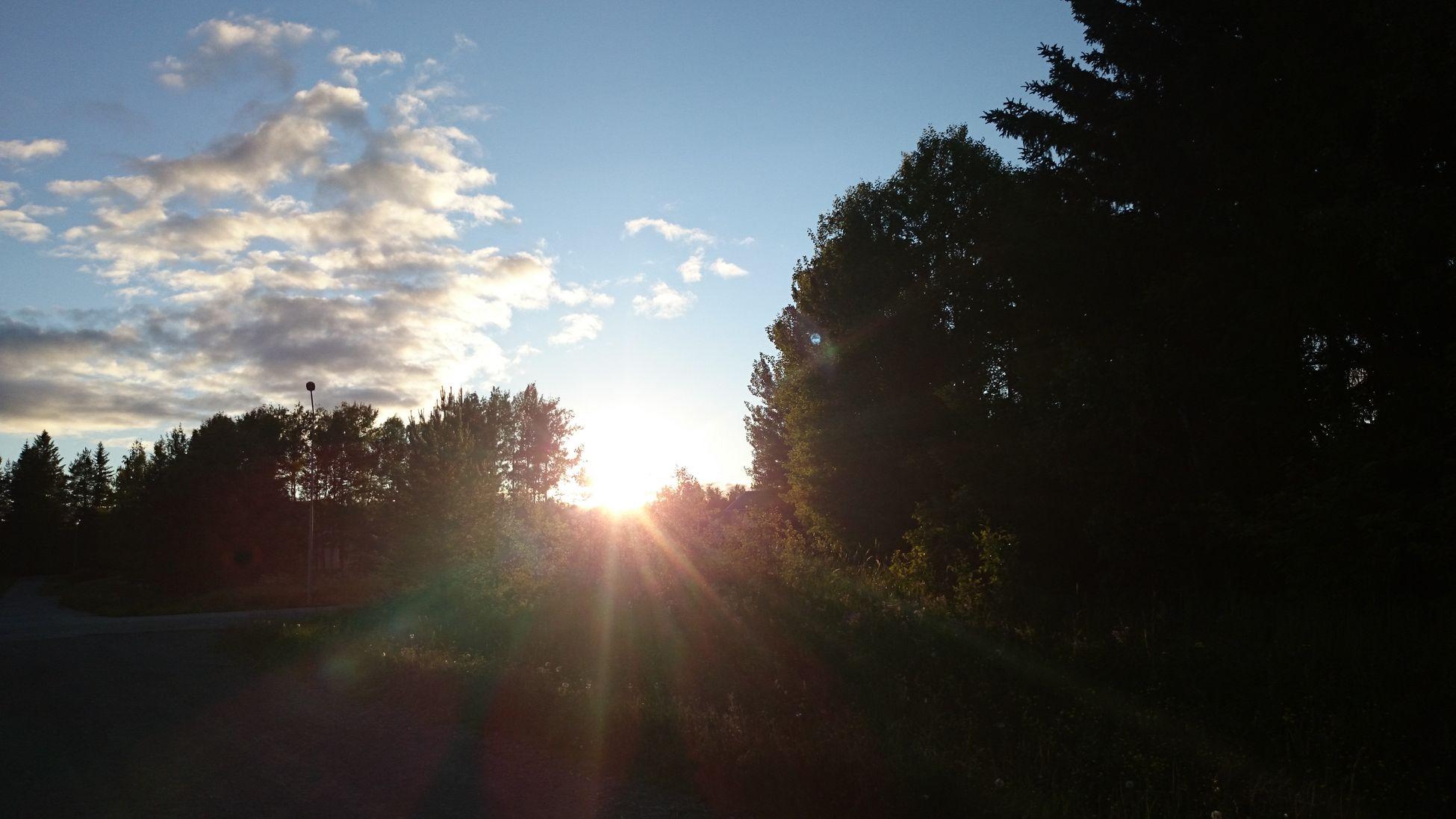Evening walk with my dog! Kvällssol Evening Walk