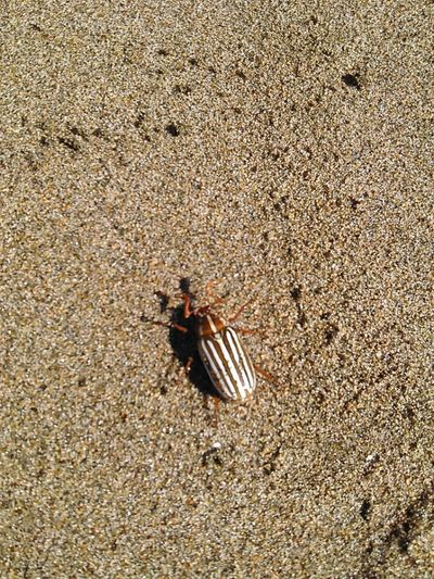 Insect Photography Ocea Beach, San Francisco Taking Photos Check This Out