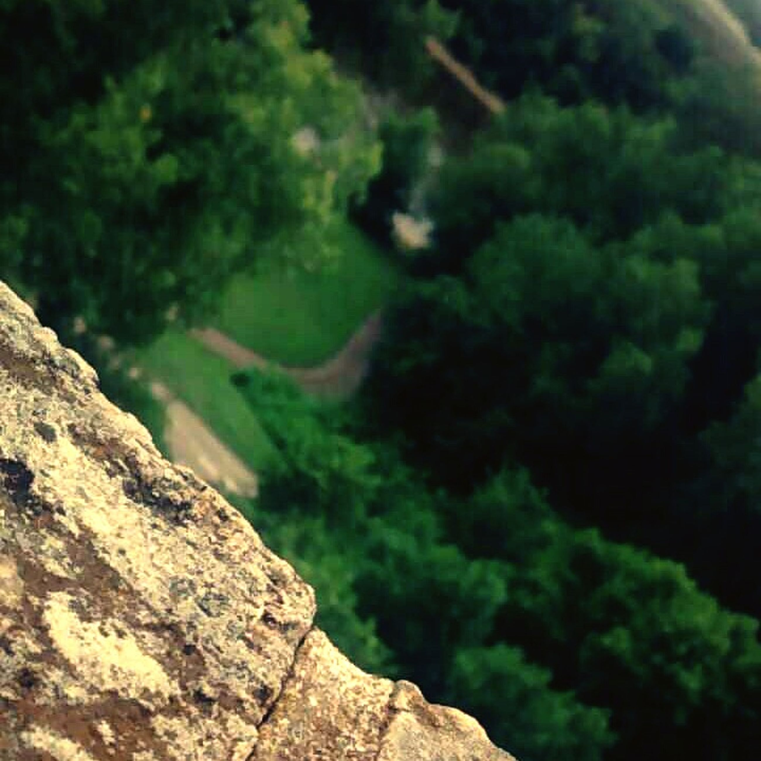 tree, forest, moss, green color, nature, growth, beauty in nature, tranquility, rock - object, close-up, focus on foreground, selective focus, scenics, plant, outdoors, day, tranquil scene, no people, rock, green