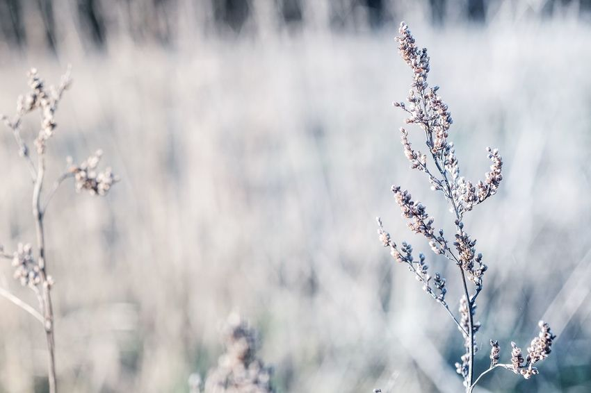 Nature Growth Flower Close-up Beauty In Nature Focus On Foreground Tree No People Outdoors Plant Fragility Branch Day Freshness Zeiss60mm Tenebrio.photos Fuji-xe2s Wintertime Showcase: December Frosty Mornings Cold Temperature Beauty In Nature Grassland