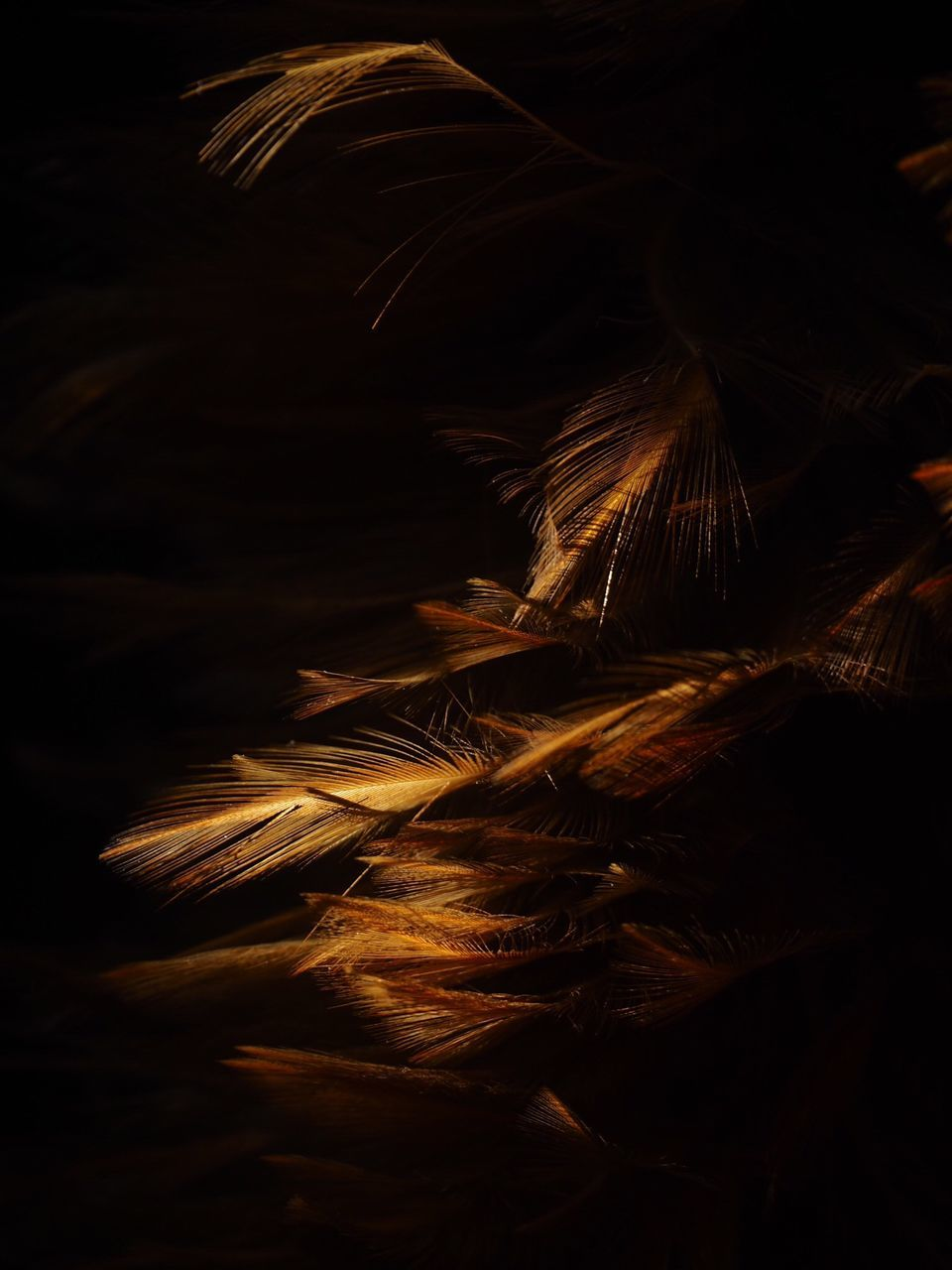 night, indoors, close-up, no people, black background, nature