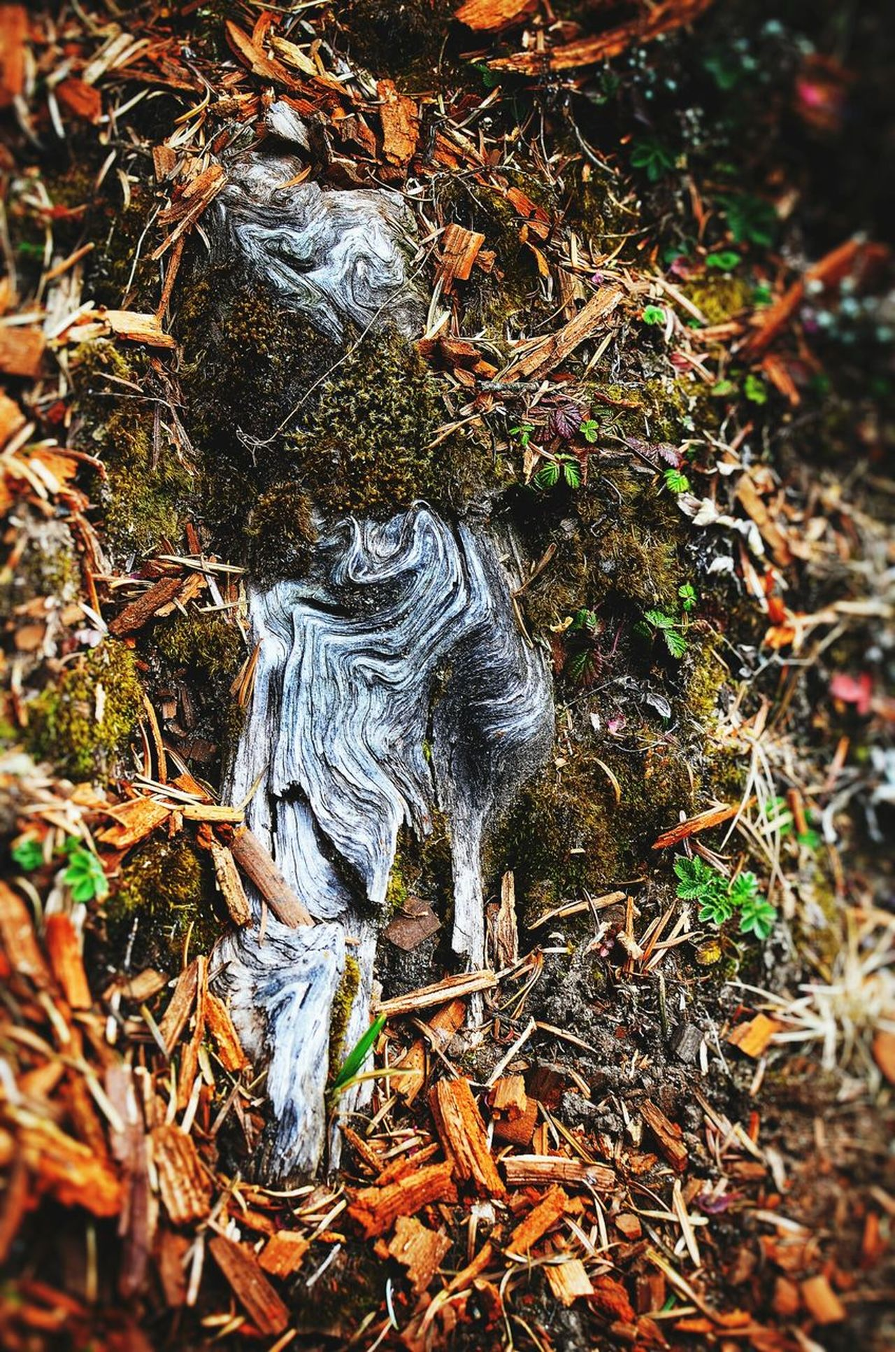 No People Nature Beauty In Nature Natureartwork Natureartist Nature Reserve Natureart Art In Nature Beauty In Nature Textured  Tree Trunk Wood - Material Wooden Texture Lady Of The Woods Lady In Forest