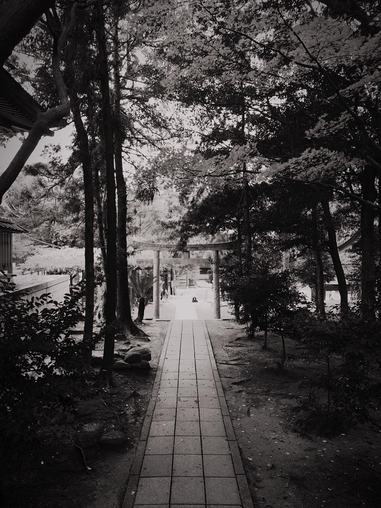 香椎宮4〜 Shrine Of Japan Shrine Japanese Shrine Spiritual Nature Beauty In Nature TreePorn Japanese Culture Spirituality Tree Eyeemphotography Spritual Journey Path Pathway Tree The Way Forward Outdoors Fukuoka,Japan