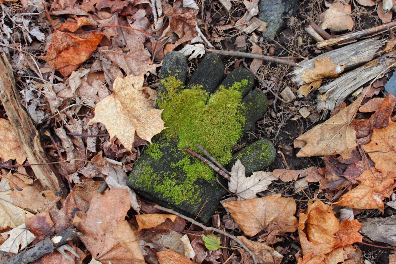 •and the green grass grows all around• Eery Leaf Nature Change Leaves Beauty In Nature Outdoors Forest Upstate Upstate New York Upstateny Moss Glove Trees First Eyeem Photo Manvsnature  EyeEmNewHere EyeEmNewHere