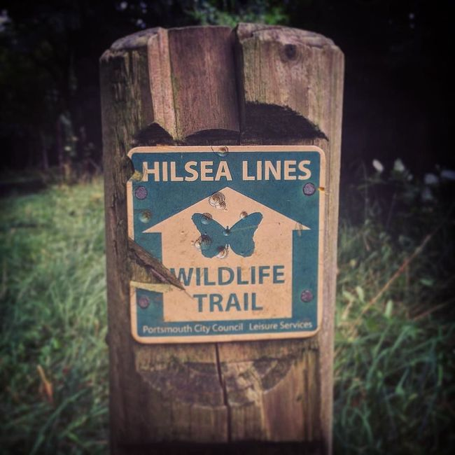 Hilsea Lines Wildlife Trail Ancient Monument Close-up Day Focus On Foreground Grass Growth Hilsea Lines Hilsea Lines Ramparts History Walk Information Information Sign Nature Nature Walk No People Outdoors Plant Pole Portsea Island Portsmouth Ramparts Selective Focus Walk Walk This Way Walking Wildlife Trail