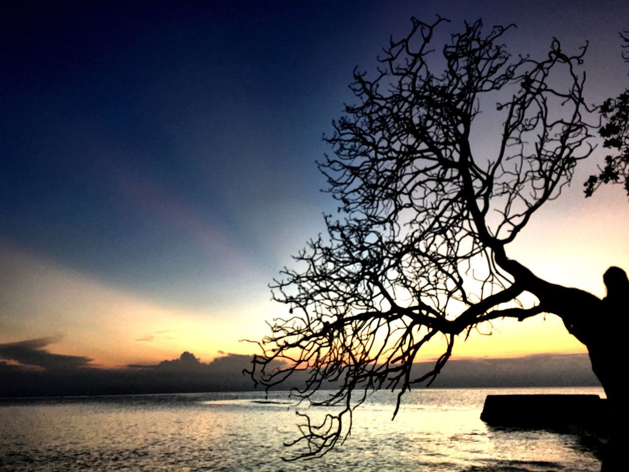 silhouette, sunset, beauty in nature, tree, water, sky, nature, tranquil scene, scenics, tranquility, sea, bare tree, outdoors, branch, horizon over water, no people, lone, day