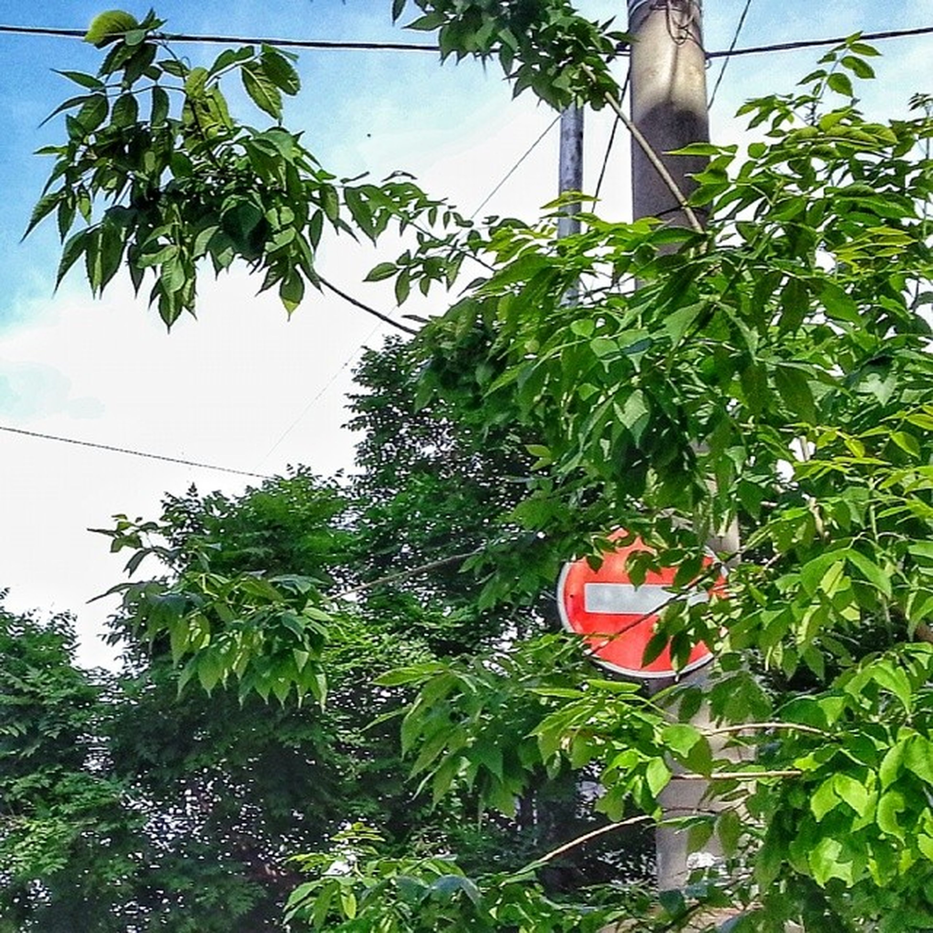 tree, low angle view, hanging, growth, green color, sky, plant, day, leaf, nature, no people, outdoors, branch, red, green, clear sky, built structure, sunlight, building exterior, pole