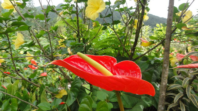 Botany Close-up Flower Flower Head Focus On Foreground Fragility Freshness Growing Growth Leaf No People Petal Plant Red