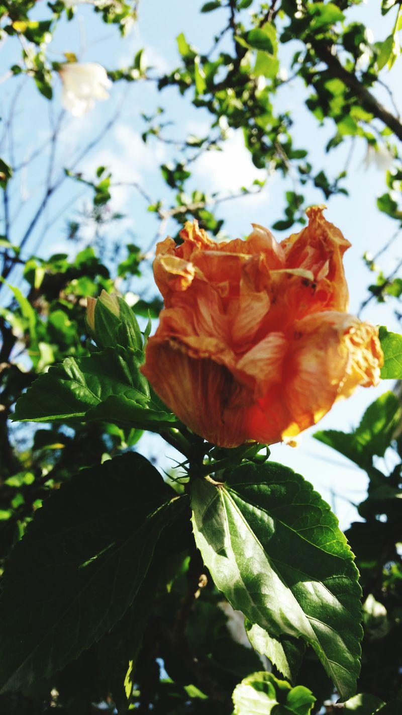 Peachflowers Nature_collection Nature On Your Doorstep Hello World Naturelovers Eyem Best Shots Eyemnaturelover