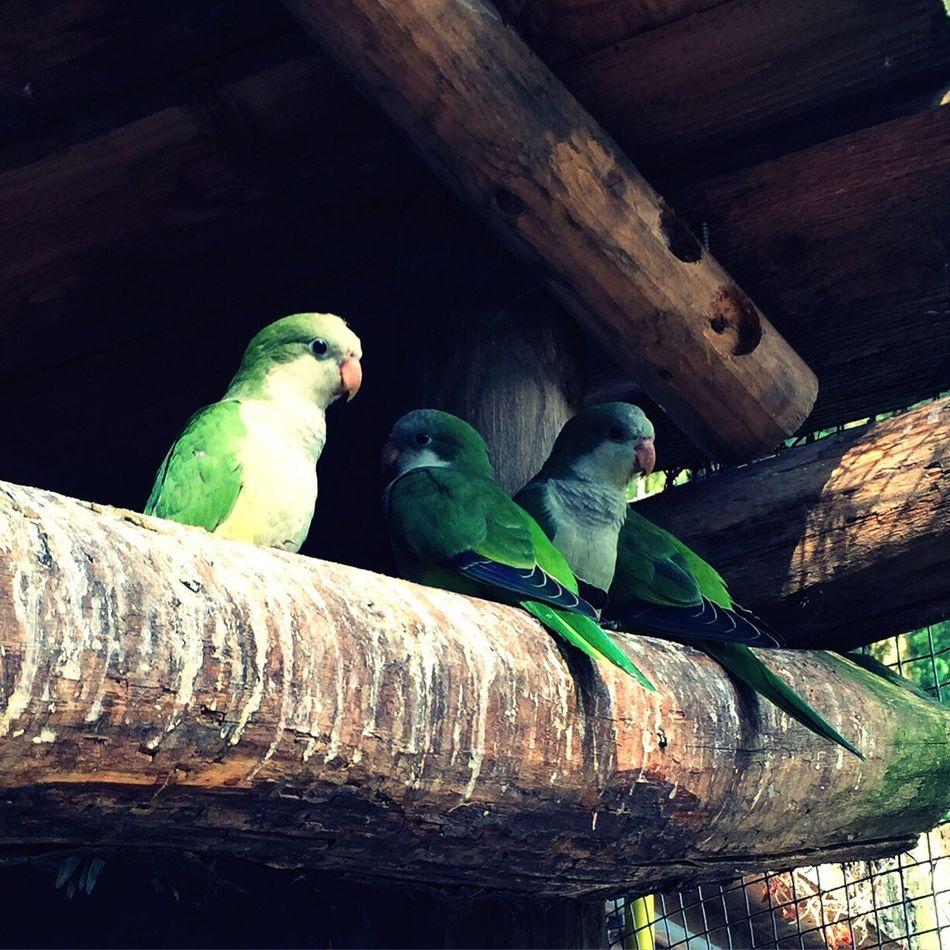 Birdy Birds Enjoying Life
