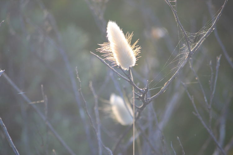 Sunlit Sunlit Sunlit Grass Nature Fragility Plant Day Close-up Growth Outdoors