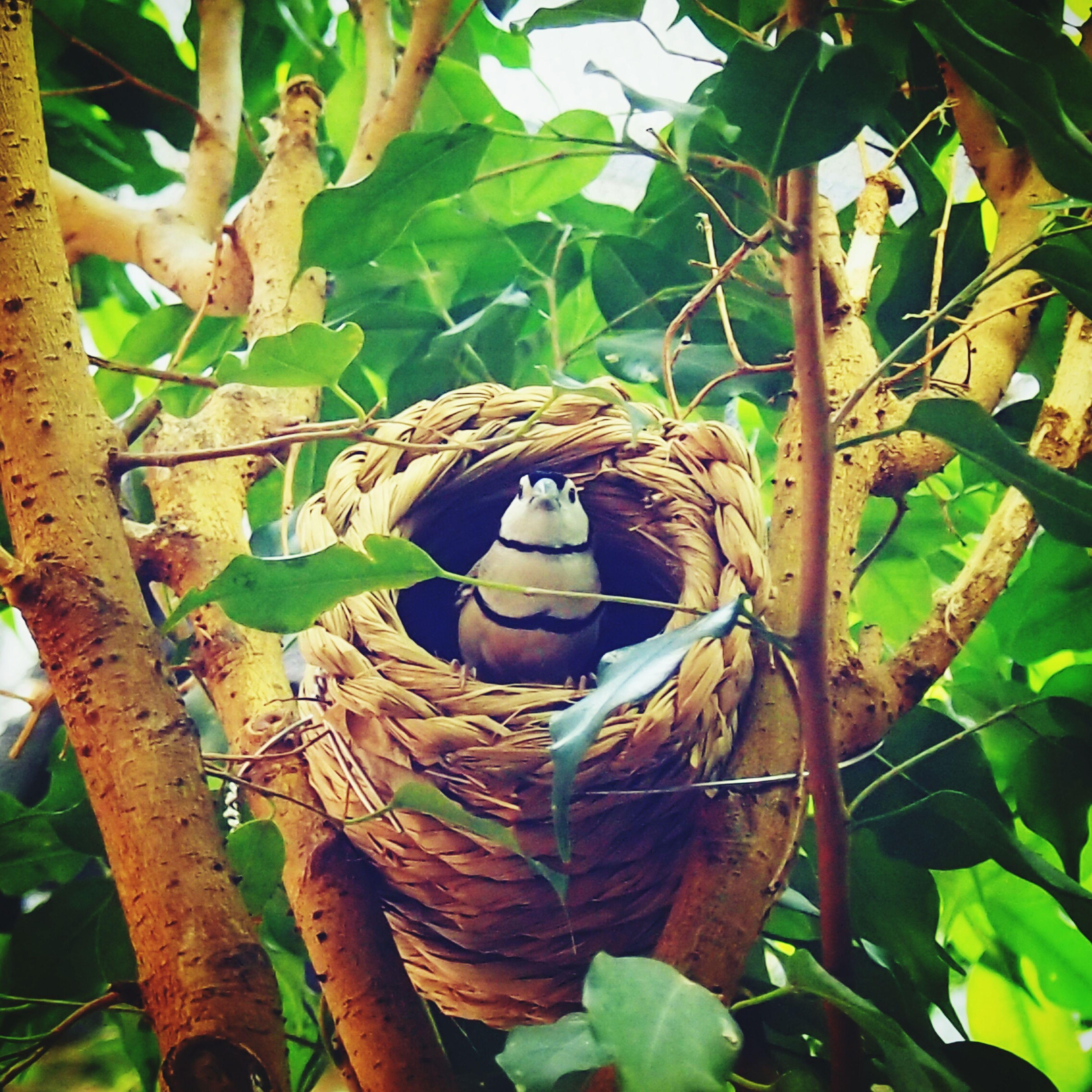 こんにちは Animals Birds 上野動物園 Zoo