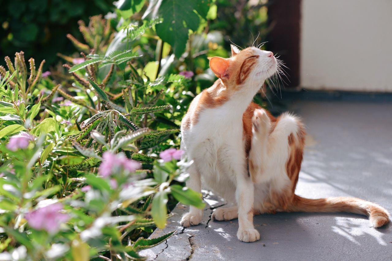 Beautiful stock photos of guten morgen, Animal Behavior, Animal Themes, Cat, Day