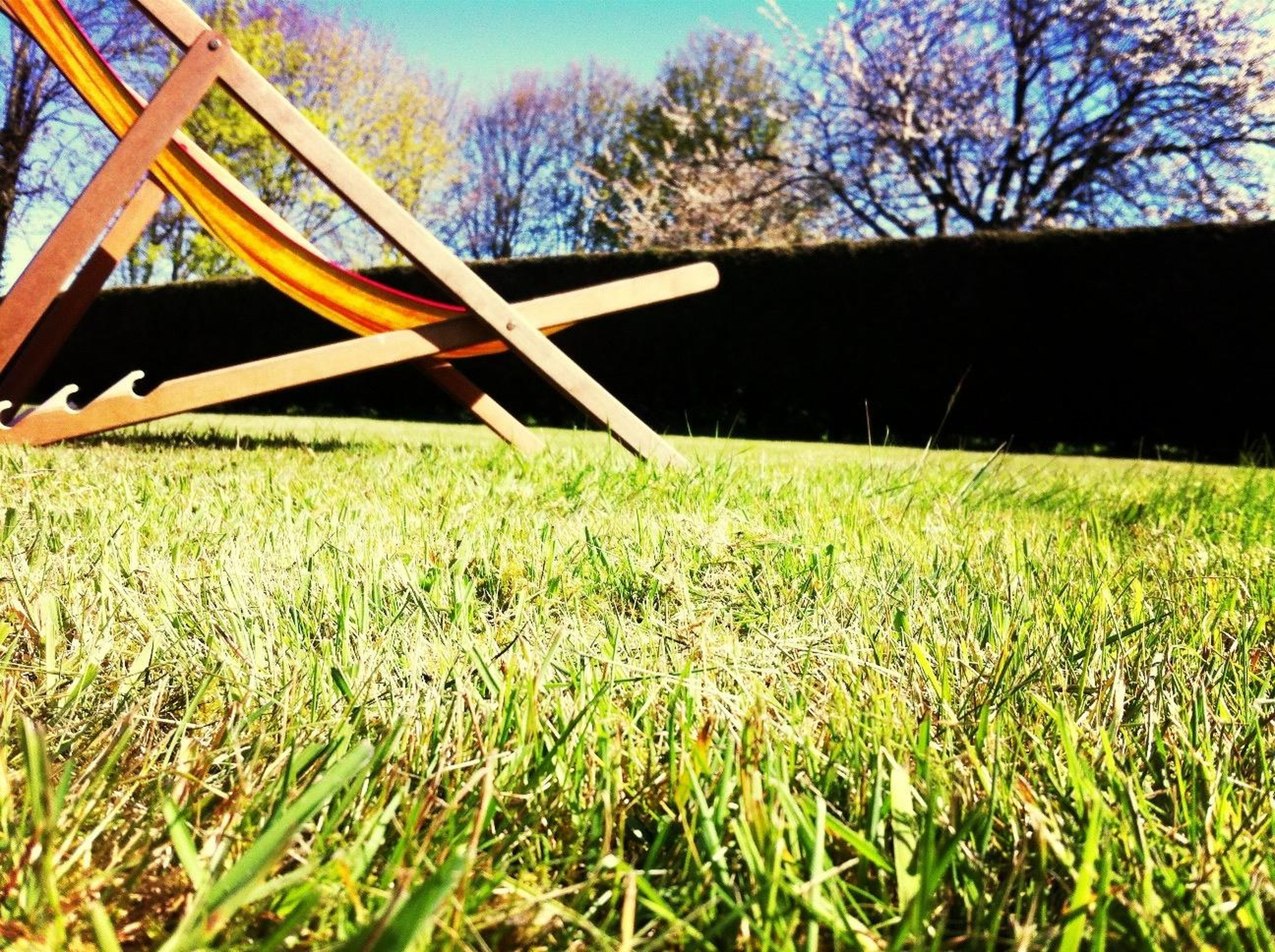 grass, field, tree, growth, grassy, green color, nature, plant, sky, tranquility, sunlight, day, outdoors, no people, park - man made space, built structure, close-up, lawn, branch, fence