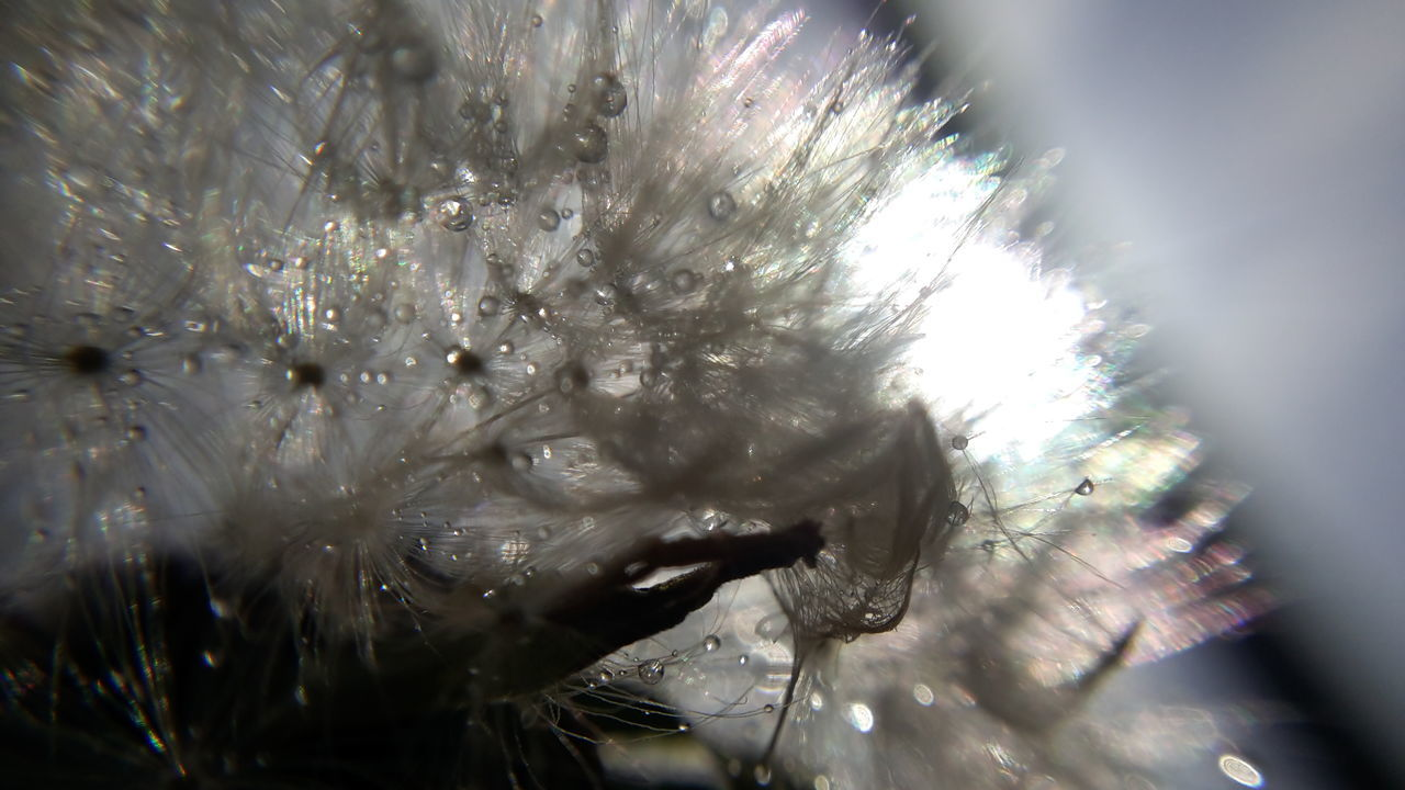 nature, fragility, selective focus, growth, no people, outdoors, day, close-up, beauty in nature, flower, freshness