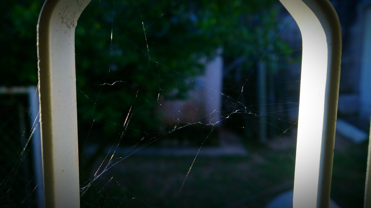 window, focus on foreground, no people, close-up, day, outdoors, fragility, nature