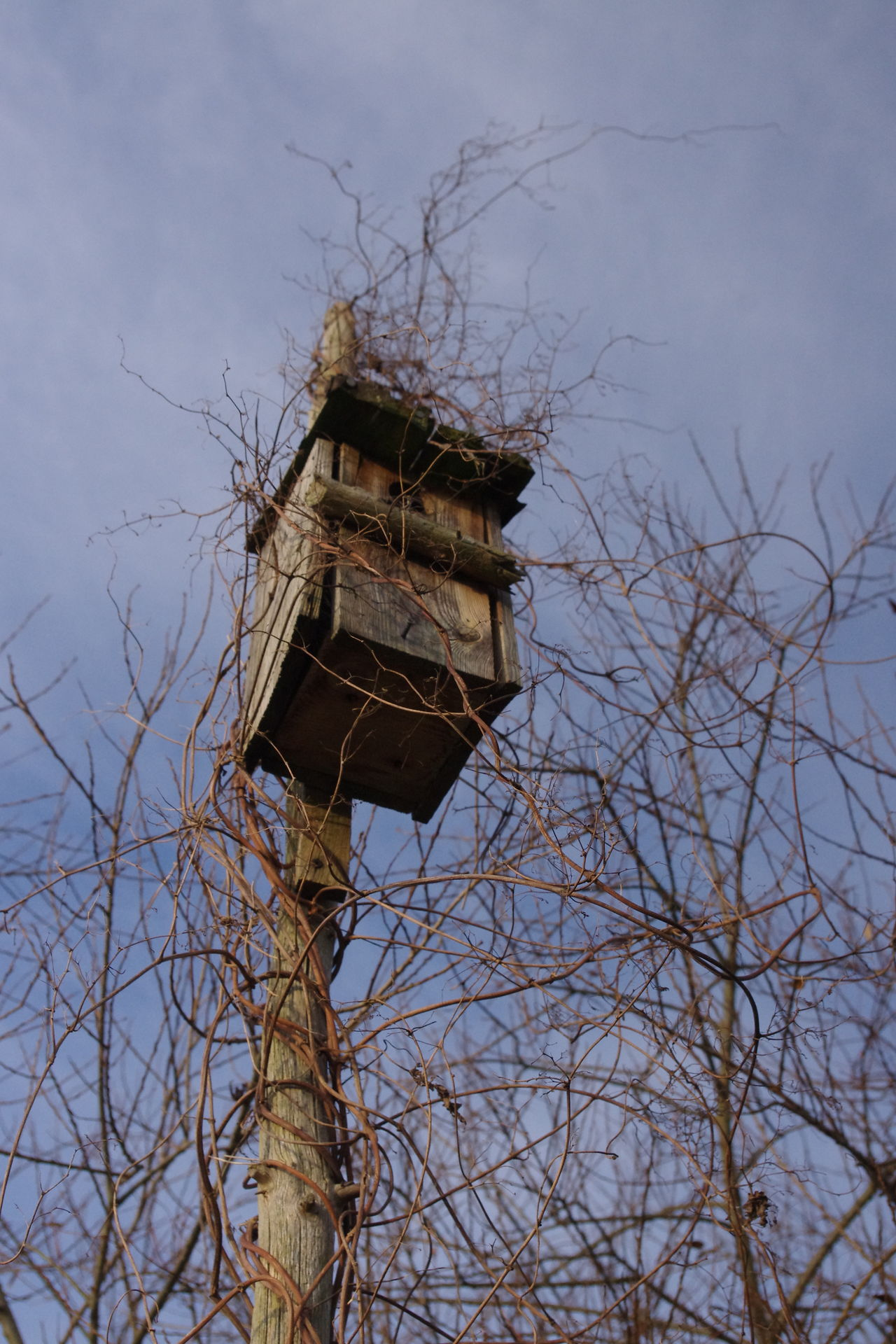 Bird House Bue Sky Building Exterior Low Angle View Outdoors Sky Tall - High Tree