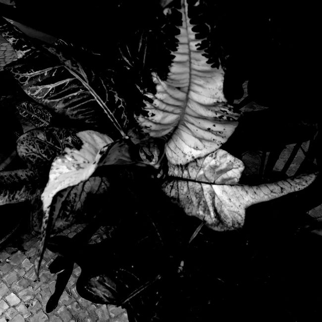 Trying new apps. Black And White Blackandwhite Black & White NEM Black&white For My Friends That Connect IPhoneography IPhoneArtism Plants