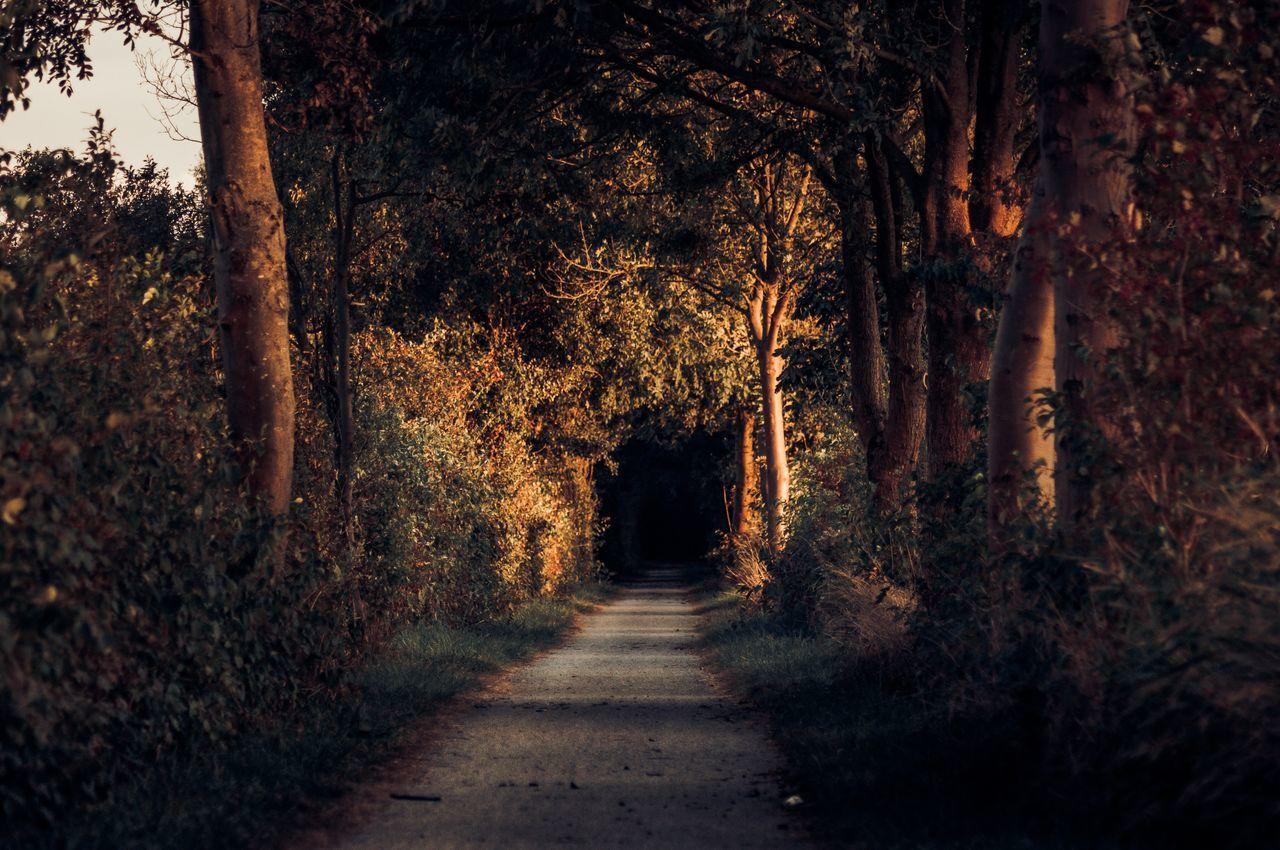 Beautiful stock photos of fall, tree, nature, tranquility, the way forward