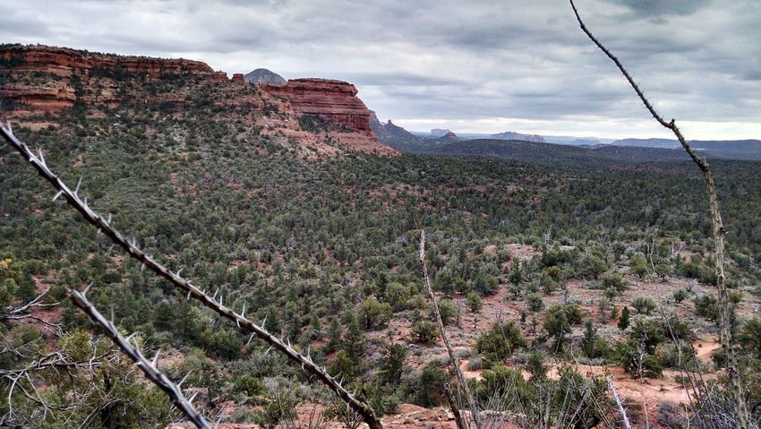 Cloud - Sky Nature Landscape Travel Destinations Outdoors Sky Tourism Mountain Beauty In Nature No People Wildflower Tree Scenics Day Ocotillo Beauty In Nature Boynton Canyon Sedona Arizona Tranquility Nature Red Forest Vista Tranquil Scene