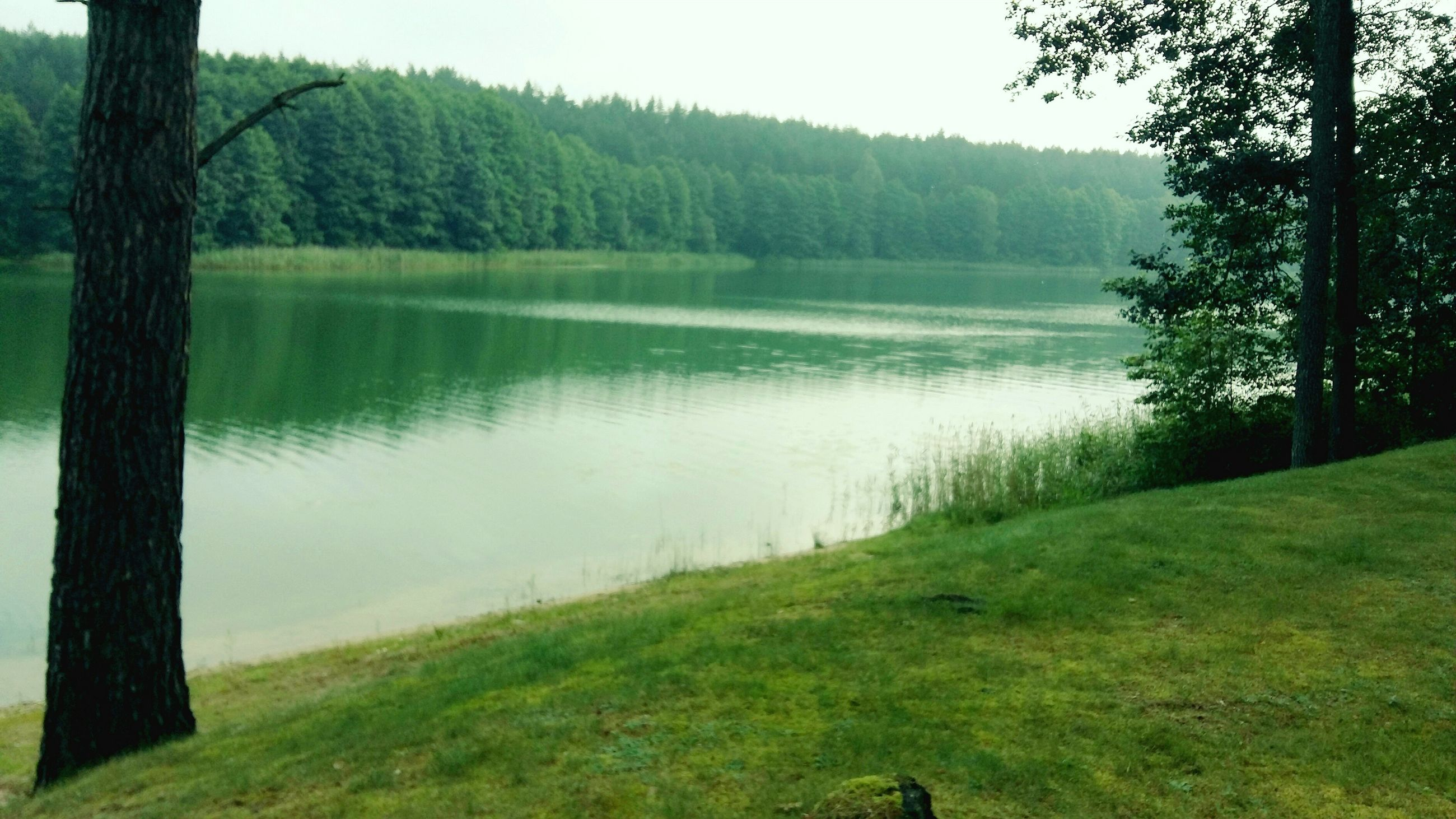 nature, tree, tranquility, water, growth, grass, beauty in nature, tranquil scene, scenics, no people, lake, day, outdoors, landscape, lakeside