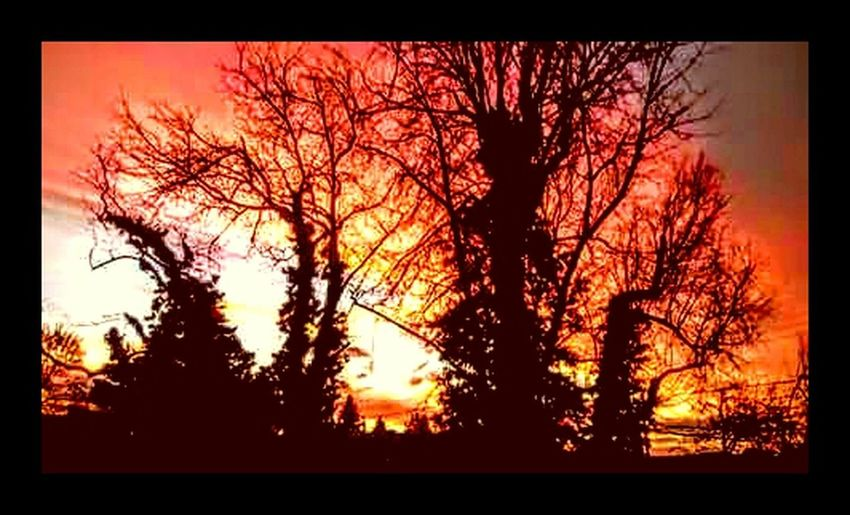 Sunset Silhouettes Sunset_collection Pink Sunset Warm Sunset Salmon Colored Colorful Sky Tree Silhouettes Tree_collection  Tree Porn Trees And Sky Spokane Wa Home Town Inlandempire