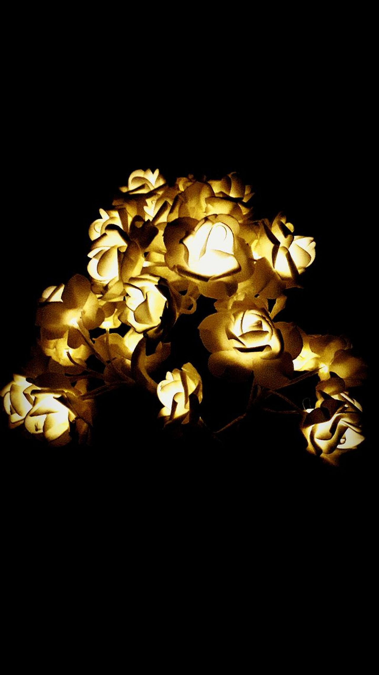 Illuminated Gold Colored No People Savings Black Background Gold Chinese New Year Currency Close-up Christmas Decoration Night Indoors  Representing rose Rose Collection Outdoors Full Frame Day Nature Roses🌹rRoses, Flowers, Nature, Garden, Bouquet, Love,