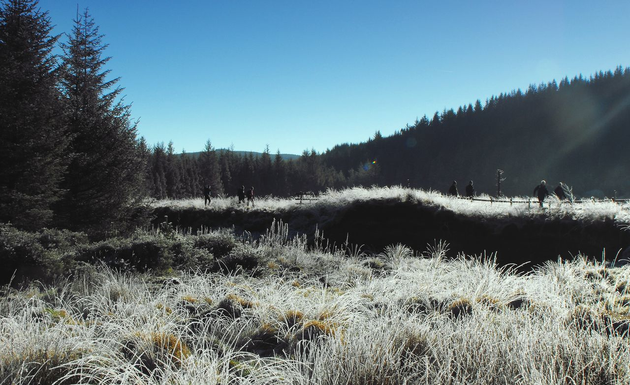 Moving towards the spring but not willing to let go of Winter yet... Wales Walking Hiking Valley Hafren River River Severn Mountains Fir Trees Frost Hikers Grass Nature горы пейзаж зима река