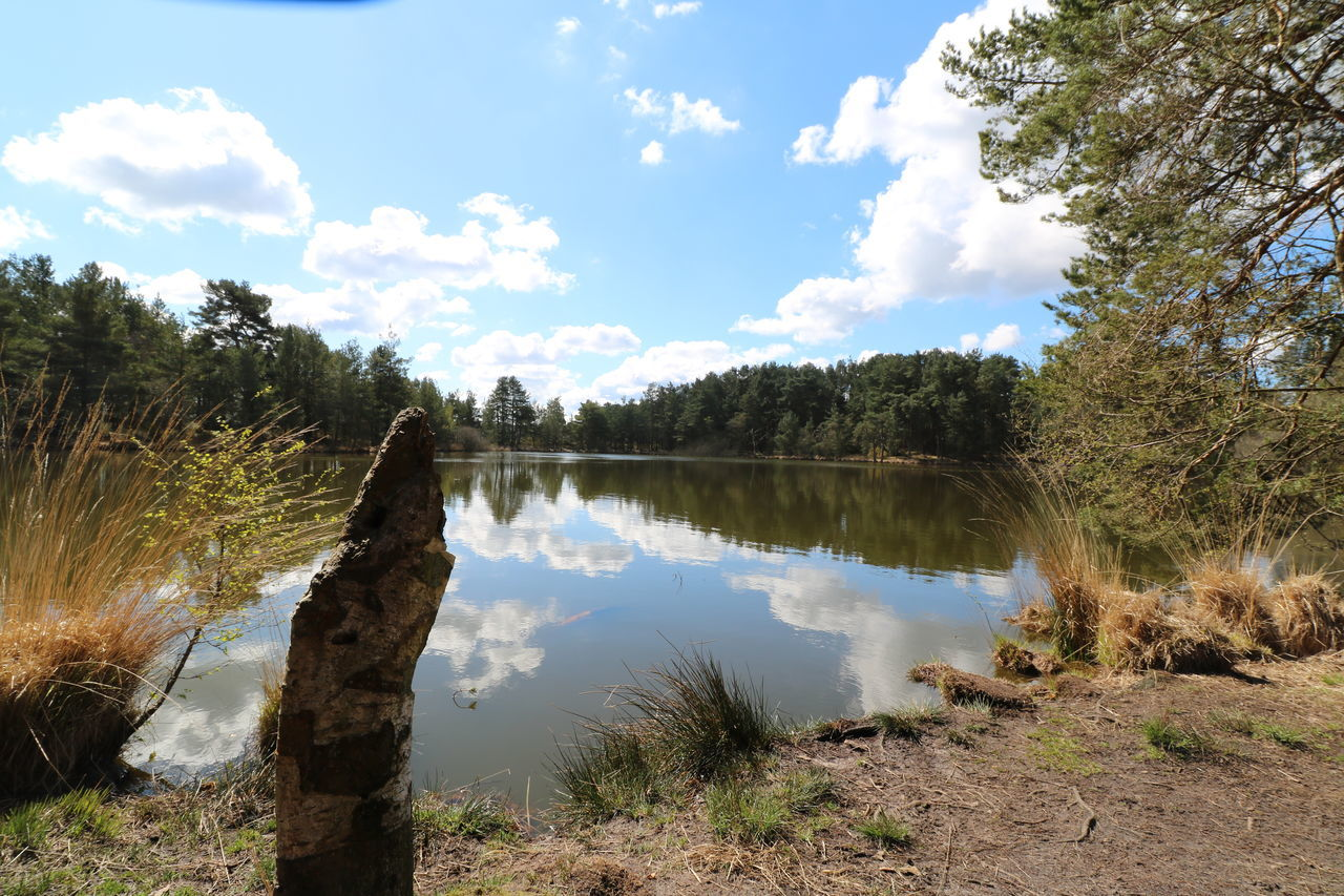 Backgrounds Bankside Common Day Heathland  Lake Landscape Nature No People Outdoors Reflection Reflection Lake Sky Tree Tree Stump Water