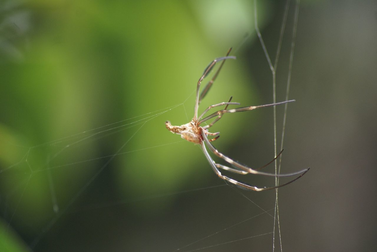Beautiful stock photos of spider's, Animal Leg, Animal Themes, Close-Up, Insect