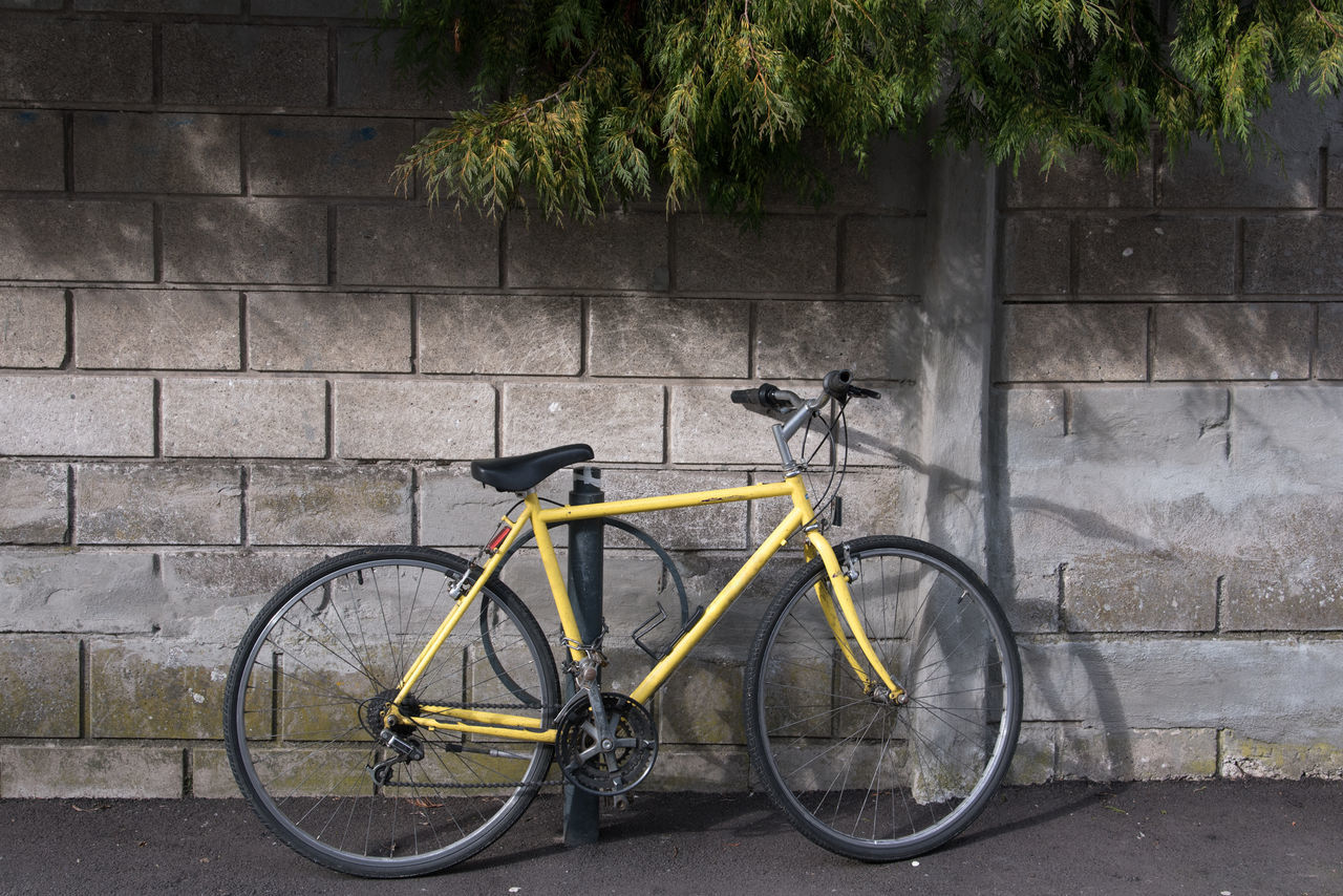 Architecture Bicycle Breeze Block Breezeblocks City Life Cycling Day Land Vehicle Mode Of Transport No People Outdoors Parking Pavement Pedal Stationary Stones Tire Transportation Tree Wall Wall - Building Feature Yellow Yellow Flower