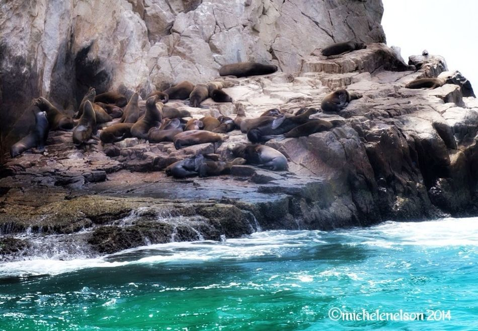 Lazy Sea Lions Sony NEX Cabo San Lucas Nature Ocean