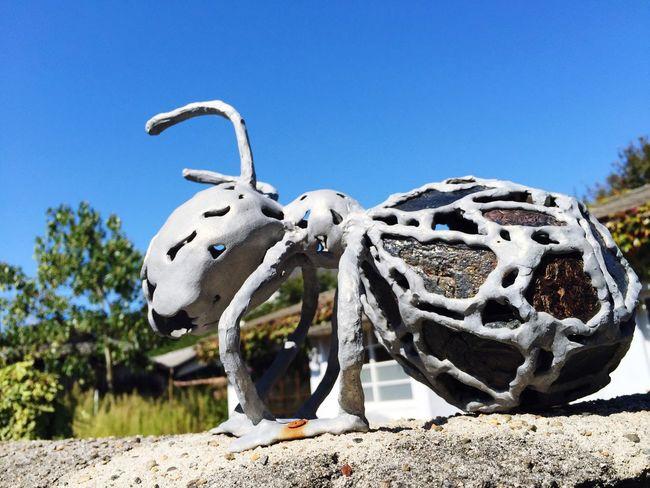 Ants ArtWork Walking Around Osanpo Camera