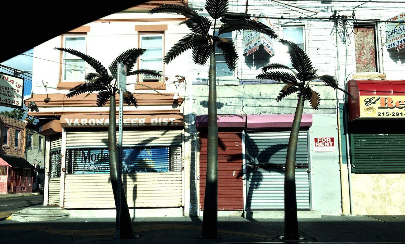Rusty Palms, N. 5th Street Streetphotography Street Photography Summertime Philadelphia