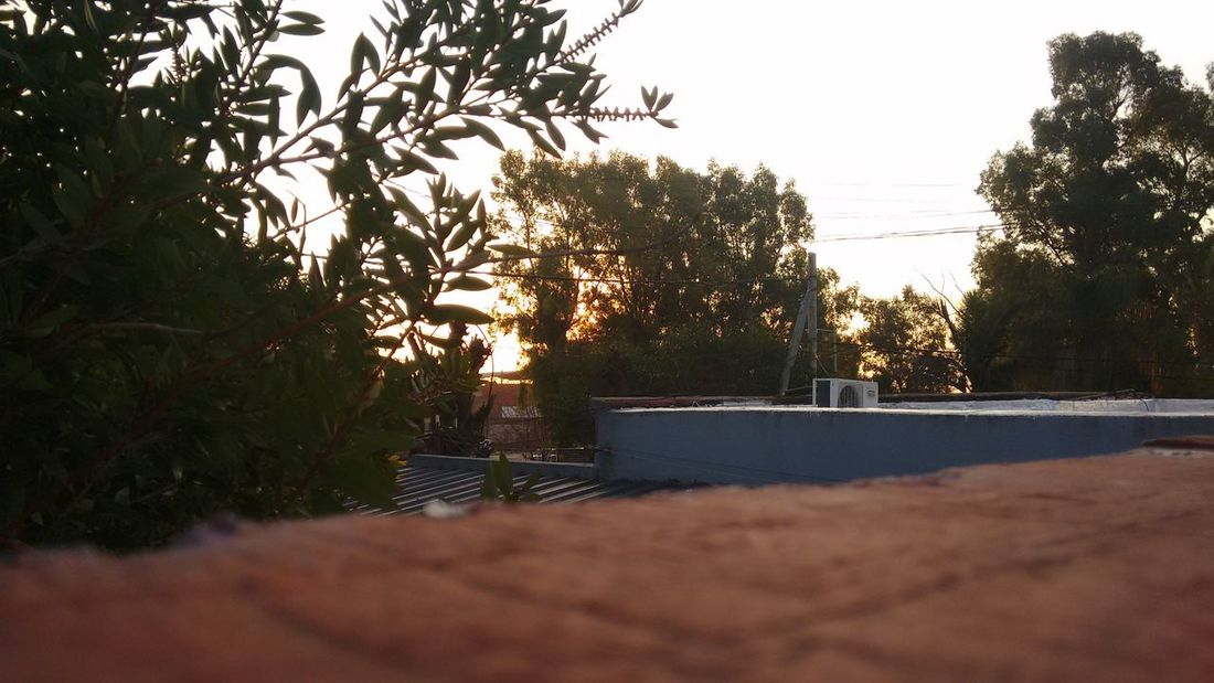 🌲 Sky And Clouds Sky Plants 🌱 Tree Green Me And My Camera Eyeem Photography EyeEm Gallery Eyeem Nature EyeEm Best Shots Wednesday Good Day Enjoying Life Taking Photos EyeEm Relaxing