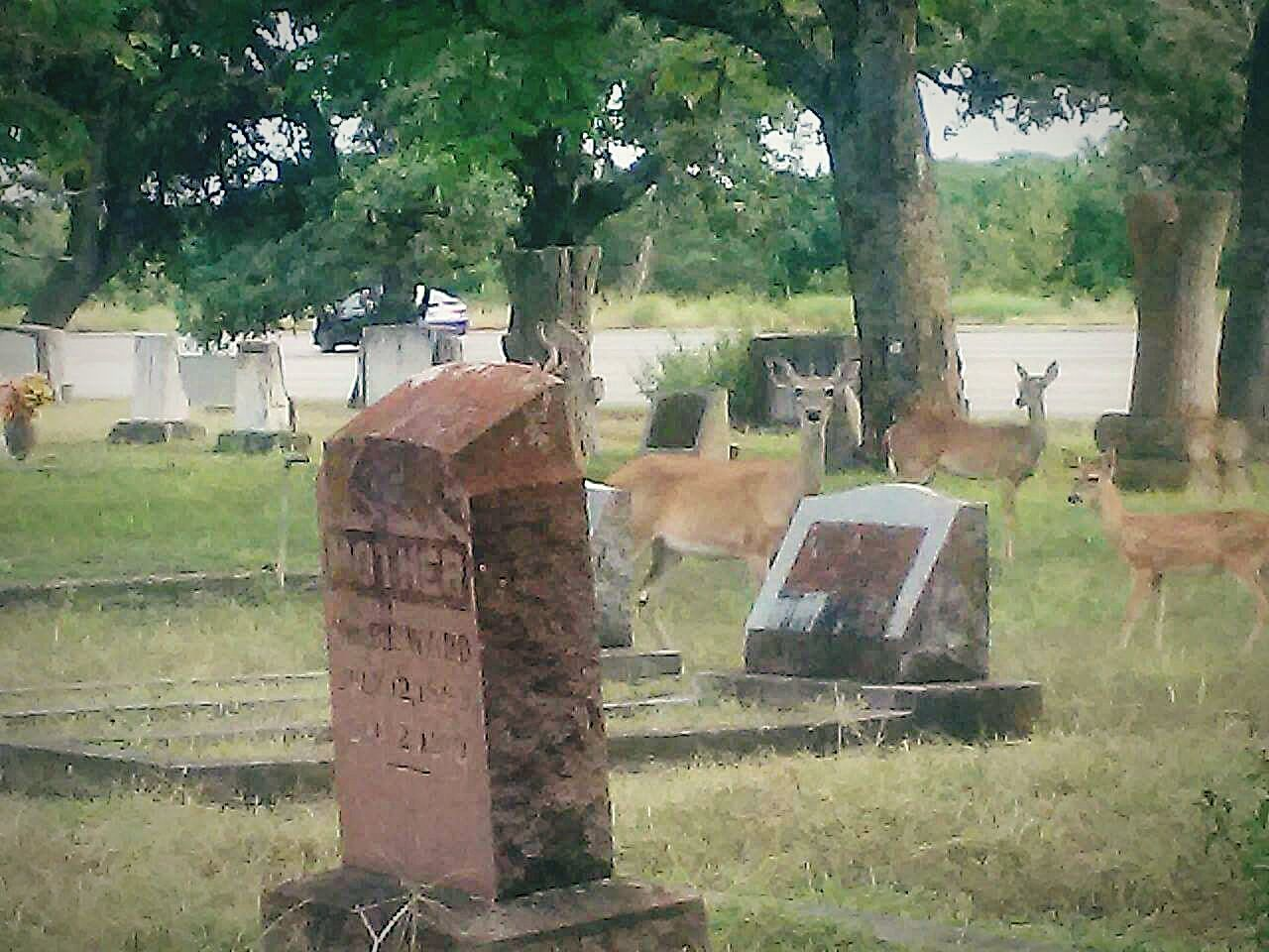 Graveyard Beauty Wildlife And Nature Deerhunter Deer ♥♥ Deer Hunting Animal Photography Hill Country Texas Deer Sighting Deersighting Fawn Deerseason Wildlife Photography Graveyardbeauty Graveyard Beauty Hunting Life Deer Moments Wildlife Bambi Wildlife & Nature Deers Deer Deer In My Yard Deerhunting Hunting Photo