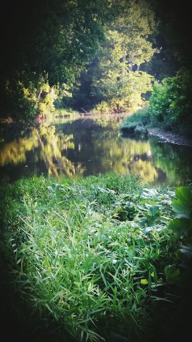 Check This Out Gepp, Arkansas Beautiful Arkansas Arkansas River Beauty In Nature
