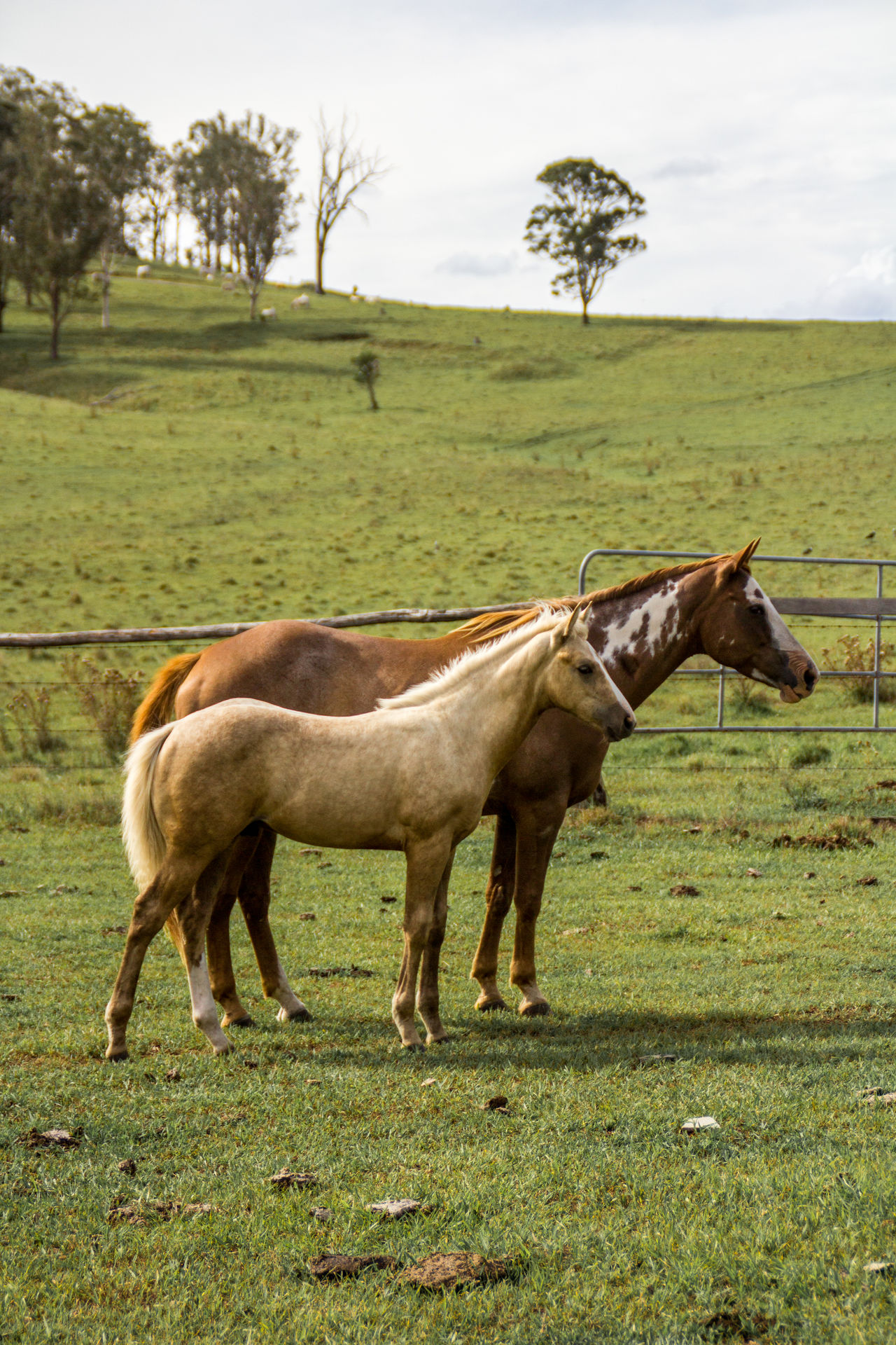 Baby horse and mother horse Animal Themes Baby Baby Horse Beautiful Brown Cute Domestic Animals Foal Grass Green Mammal Mare Mother Mother Horse Outdoors Pony Summer Young
