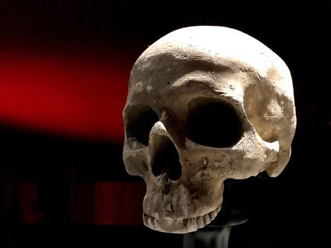 Skull Human Skull Close-up Human Skeleton Bone  Human Bone Night Indoors  Black Background