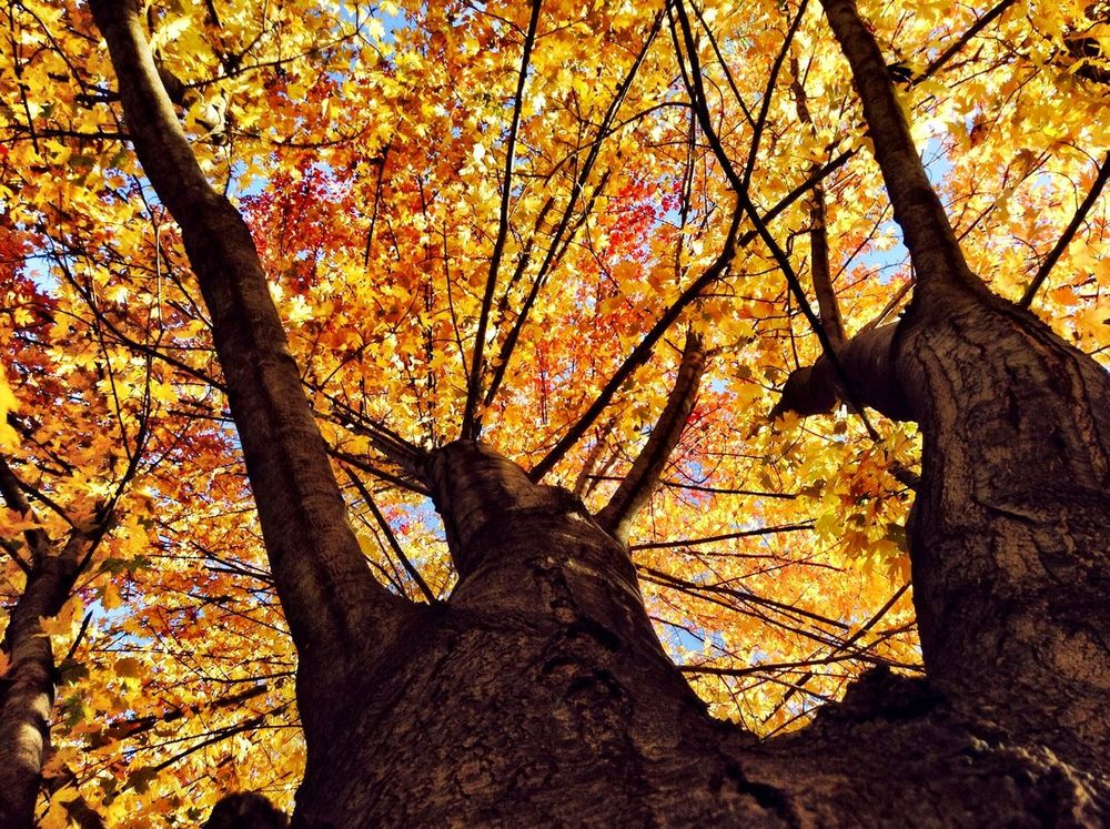 Fall Colorfull Beautiful Colors