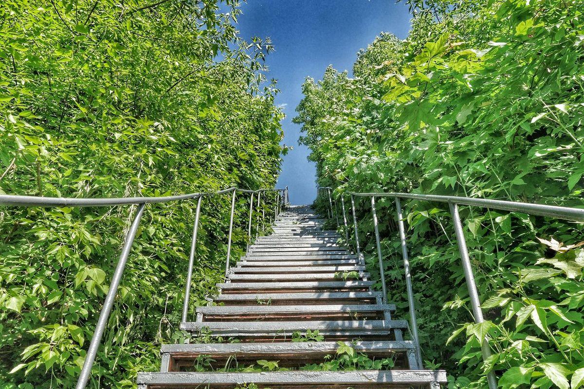 лестница лестница в небо крутаялестница высокаялестница леснаясказка Белоруссия лес и природа зелень  волшебныйлес природабелоруси