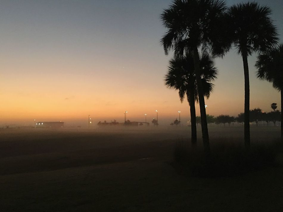 Palm Tree Sunrise Nature Beauty In Nature No People Outdoors