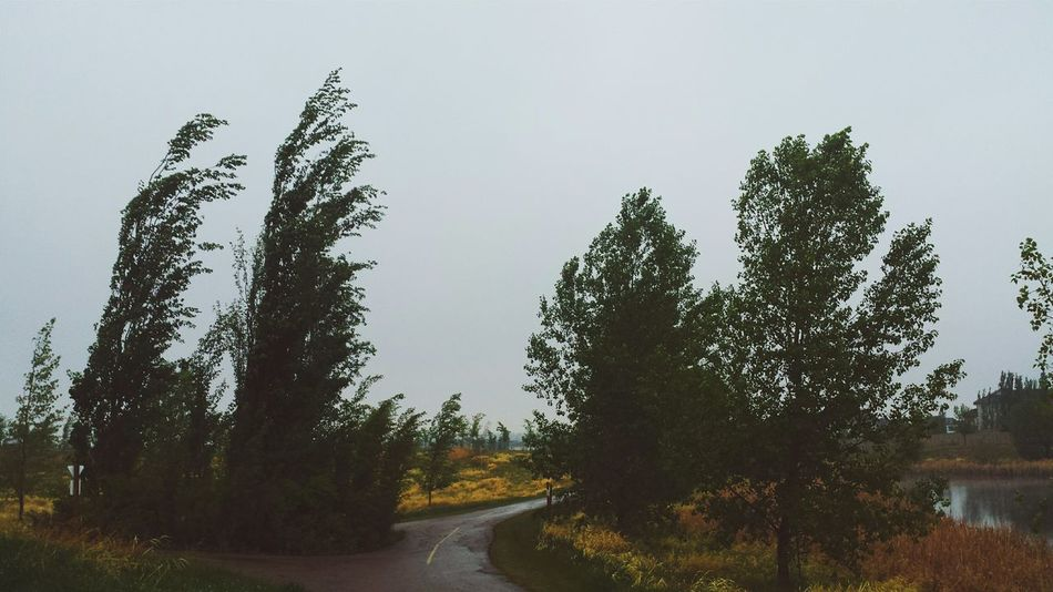 Taking Photos Cloudy Cloudy Day Rain Rainy Days Grey Sky Trees Path VSCO Biking Around In The Rain Windy Raining Clouds And Sky Clouds Sky Outdoor Photography Outdoors Trees And Sky Nature Outside Park Grey Wet Pond