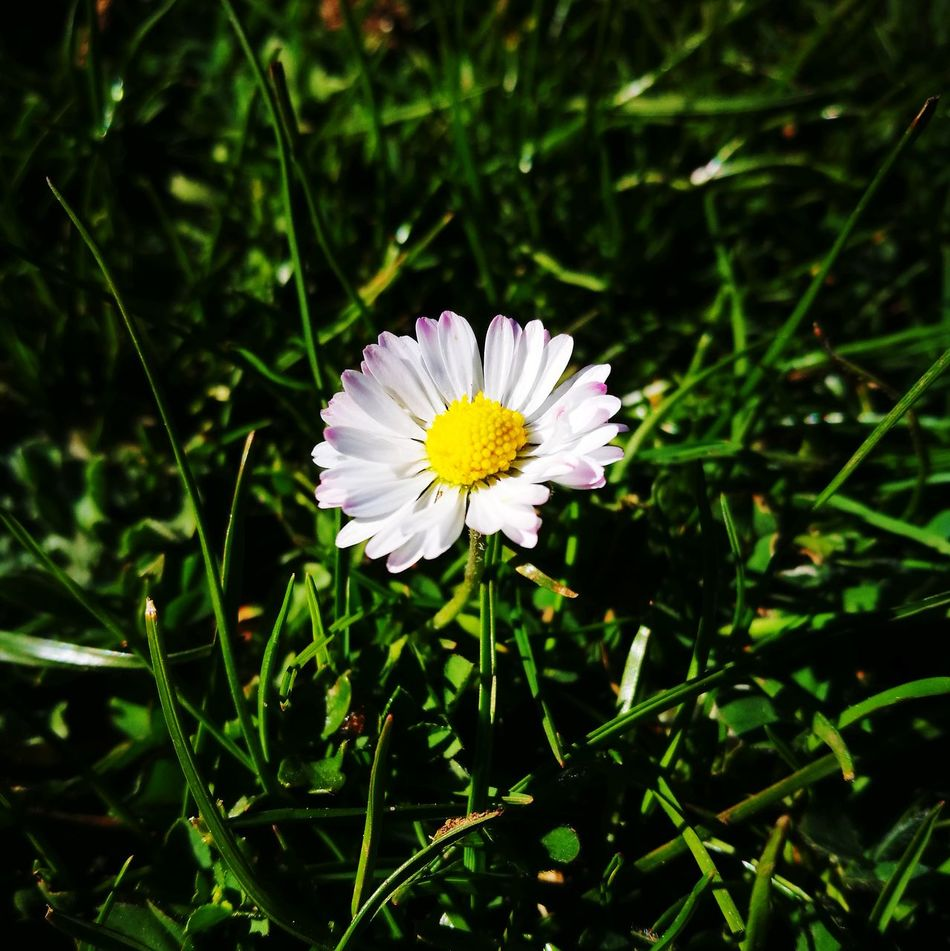 Margherita Flower Flower Head Petal Fragility Outdoors Nature Day No People Close-up Beauty In Nature Freshness Flower Photography Botanical Garden Flowers_collection Flowers,Plants & Garden Flower Collection Springtime Beauty In Nature Nature Growth Plant Daisy Flower Head Daisy 🌼 Daisyflower