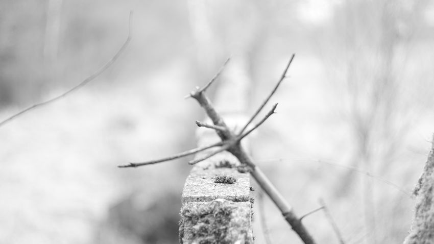 Tree Nature Close-up Outdoors Day Black & White Blackandwhite B&w Bokeh Sony A6000 Wood Sonyalpha Wall