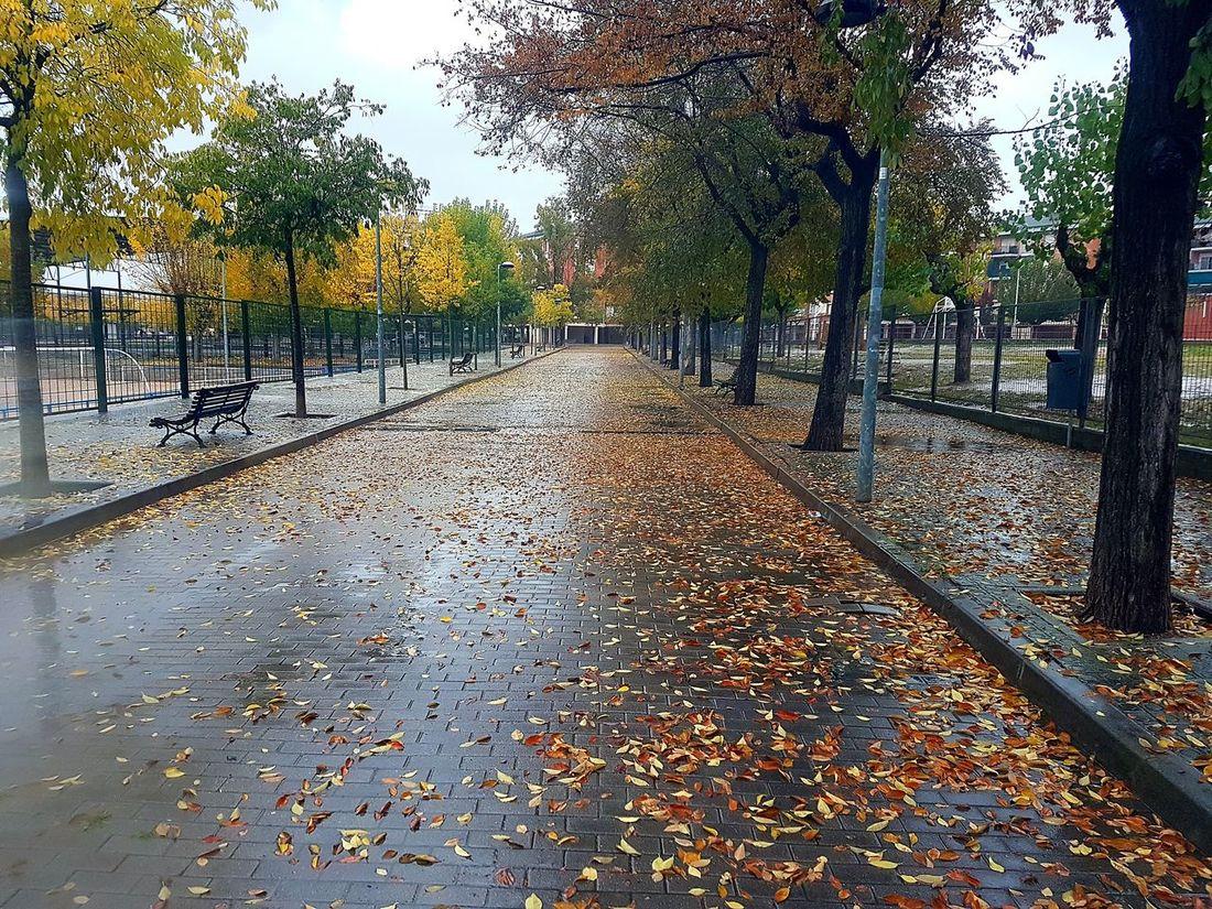 Lluvia Paseo Paseos Llueve