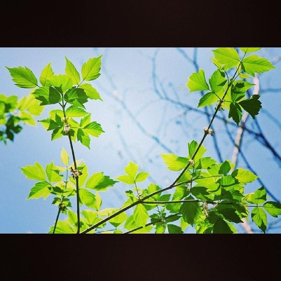 Весеннее весна листья Spring_textures Syrets spring kiev