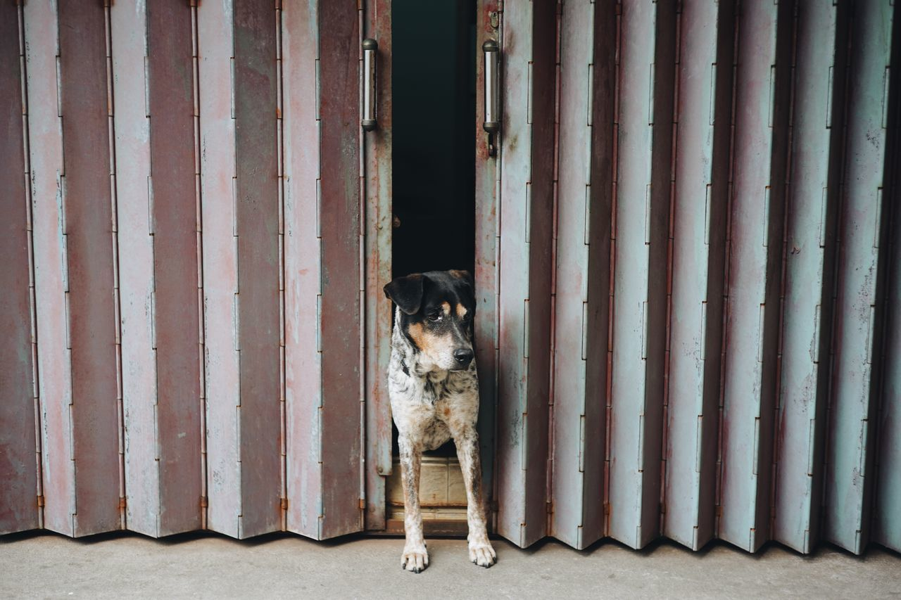 Pets Animal Themes Domestic Animals Dog Mammal One Animal Full Length No People Portrait Day Outdoors