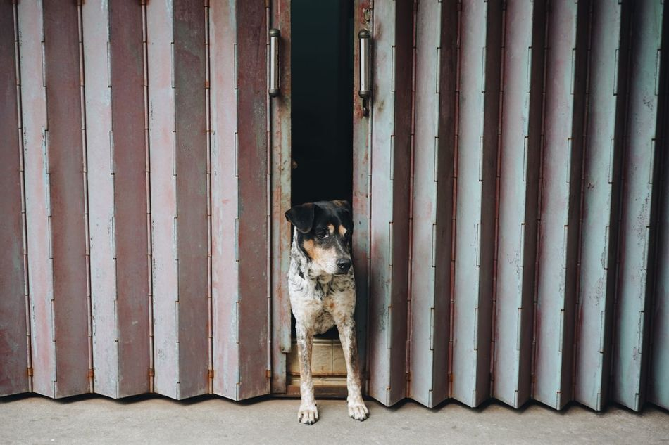 Pets Animal Themes Domestic Animals Dog Mammal One Animal Full Length No People Portrait Day Outdoors Resist