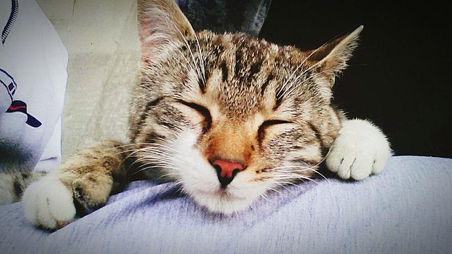 Cat♡ Animal Enjoying Life Relaxing